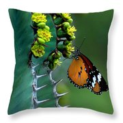 African Monarch On Cactus Throw Pillow