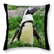 African Penguin Throw Pillow