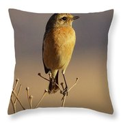 African Stone Chat Female Throw Pillow