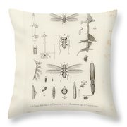 African Termites And Their Anatomy Throw Pillow by W Wagenschieber