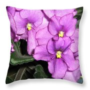 African Violets Throw Pillow