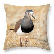 African Wattled Lapwing Vanellus Throw Pillow