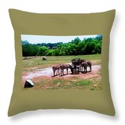 African Zebras Feeding Throw Pillow