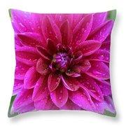 After The Rain - Purple Dahlia Throw Pillow