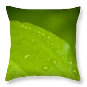 After The Rainfall 2 Throw Pillow