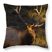 After The Rut Throw Pillow by Barbara Schultheis