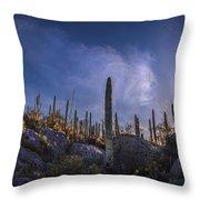 Afternoon Desert Scene Throw Pillow