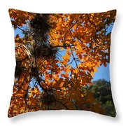 Afternoon Light On Maple Leaves Throw Pillow