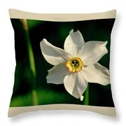 Afternoon Of Narcissus Poeticus. Throw Pillow