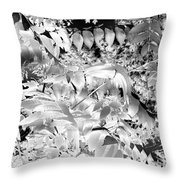 Afternoon Sunlight With Stars Throw Pillow
