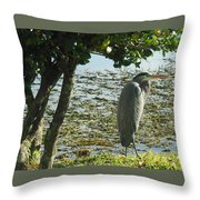 Afternoon Sunning  Throw Pillow
