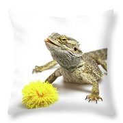Agama And Dandelion  Throw Pillow