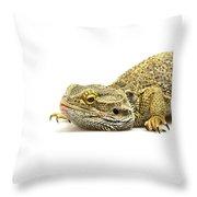 Agama Lizard  Throw Pillow