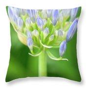 Agapanthus Africanus Flower Throw Pillow