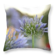 Agapanthus Africanus - Lily Of The Nile Throw Pillow
