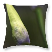 Agapanthus Bud Delight  Throw Pillow