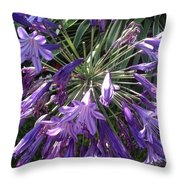 Agapanthus Flowers In Purple - New And Old Throw Pillow