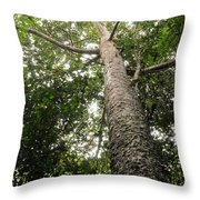 Agathis Borneensis Tree Throw Pillow