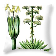 Agave Americana, Common Names Century Plant, Maguey Or American  Throw Pillow