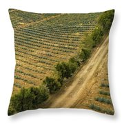 Agave Fields Throw Pillow
