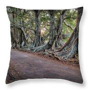 Ageless Norfolk Throw Pillow