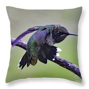 Aggressive Behavior - Ruby-throated Hummingbird Throw Pillow