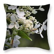 Ailanthus Webworm Moth 1 Throw Pillow