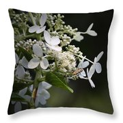 Ailanthus Webworm Moth 2 Throw Pillow