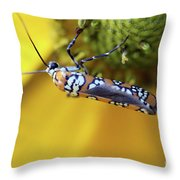 Ailanthus Webworm Moth Throw Pillow