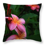 Akeakamai Pua Melia Tropical Plumeria Throw Pillow