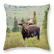 Alaska Monarch #3 Throw Pillow