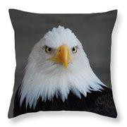 Bald Eagle Ketchikan Alaska Throw Pillow