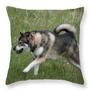 Alaskan Malamute 1 Throw Pillow