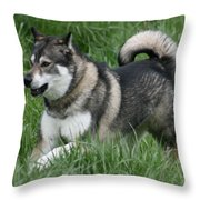 Alaskan Malamute 2 Throw Pillow