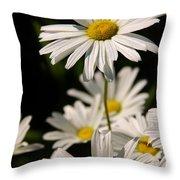 Alaskan Shasta Daisy Throw Pillow