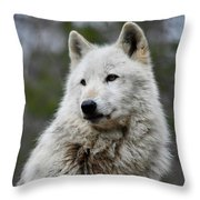 Alawa The Wolf Rests Throw Pillow