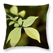 Albino Branch Throw Pillow