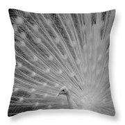 Albino Peacock In Black And White Throw Pillow