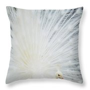 Albino Peacock Throw Pillow