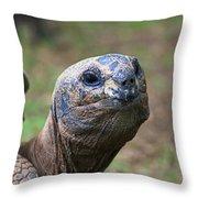 Aldabra Giant Tortoise's Portrait Throw Pillow