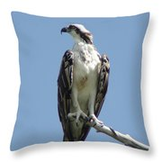 Alert Throw Pillow