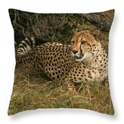 Alert Cheetah Throw Pillow