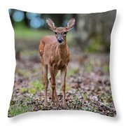 Alert Fawn Deer In Shiloh National Military Park Tennessee Throw Pillow