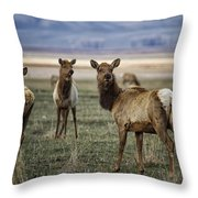 Alert On The Home Front Throw Pillow