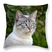 Alert Tabby With Blue Eyes Throw Pillow