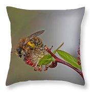 Alfalfa Bee Throw Pillow