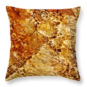 Alfred Caldwell Lily Pool Springs 2 Throw Pillow