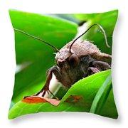 Alien Moth Throw Pillow