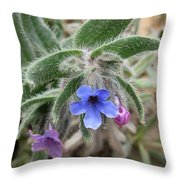 Alkanna Strigosa Throw Pillow