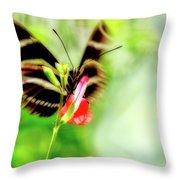 All A-flutter Throw Pillow